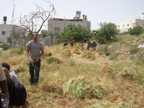 Palestinians and Taayush members gathering plants